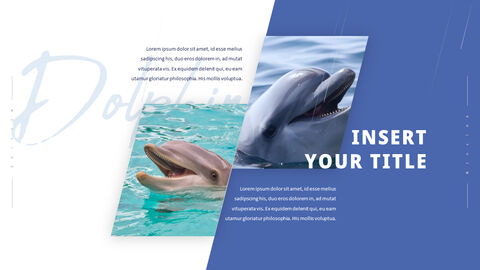 Dolphin PowerPoint Templates Multipurpose Design_05
