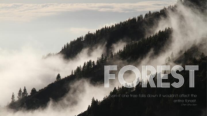 forêt_01