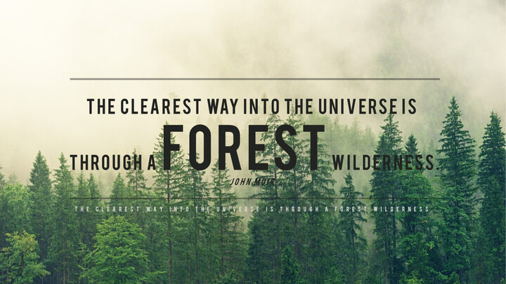 forêt_02