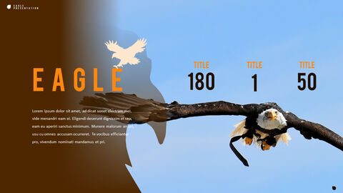 Eagle PowerPoint Presentation Templates_03