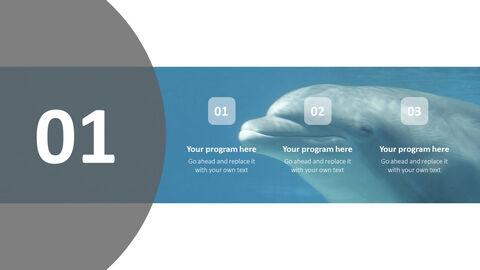 Aquarium Simple PowerPoint Template Design_04