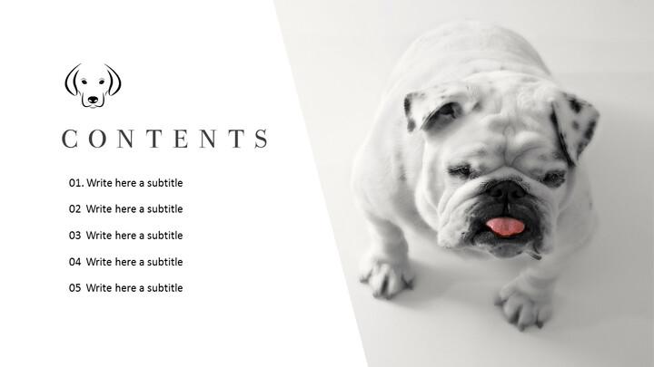Pet shop Simple PowerPoint Template Design_02