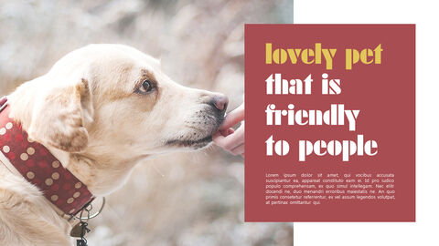 Lovely Pet Simple PowerPoint Templates_03