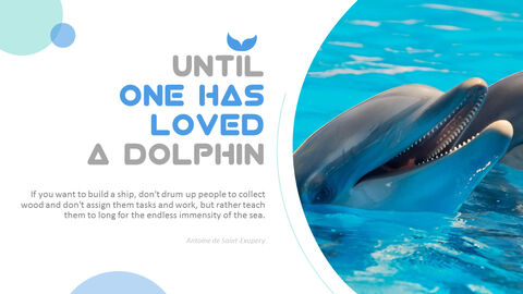 Dolphin PowerPoint Templates for Presentation_04
