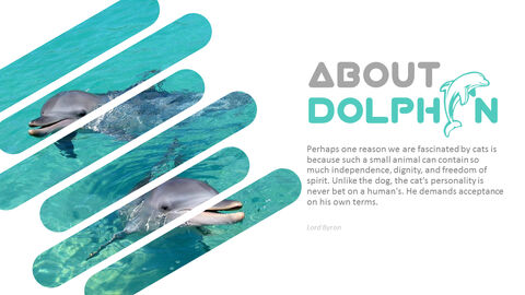 Dolphin PowerPoint Templates for Presentation_05
