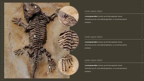 화석 템플릿 PPT_06