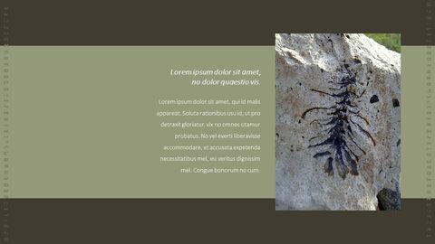 화석 템플릿 PPT_07