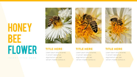 허니비(꿀벌) 간단한 디자인 템플릿_04