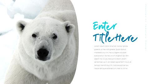 북극곰이 사는 곳 피피티 슬라이드_09