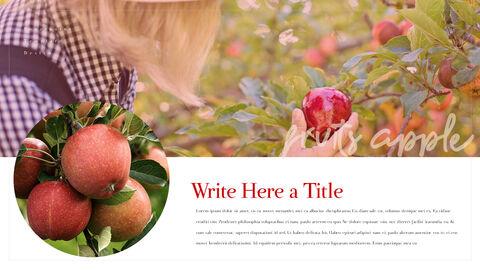 사과 과수원 프레젠테이션 PPT_05