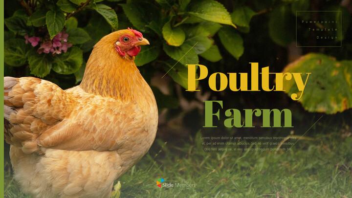 PoultryFarm Simple PowerPoint Templates_01