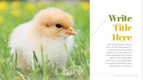 PoultryFarm Simple PowerPoint Templates_02