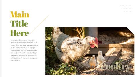 PoultryFarm Simple PowerPoint Templates_04
