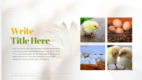 PoultryFarm Simple PowerPoint Templates_05