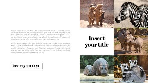 동물원 프레젠테이션용 PowerPoint 템플릿_04