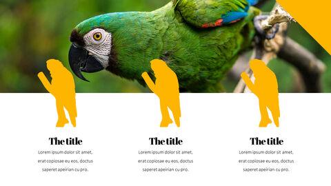 Parrot Best PowerPoint Templates_05