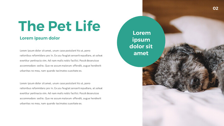 Pet Life Simple PowerPoint Template Design_02