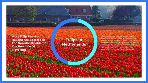 네덜란드 창의적인 파워포인트 프레젠테이션_10