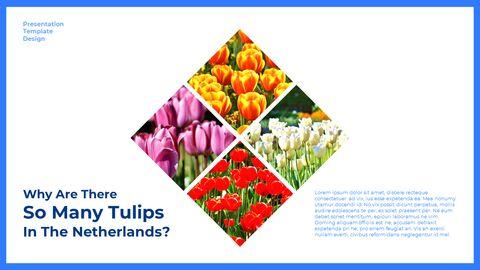 네덜란드 창의적인 파워포인트 프레젠테이션_11