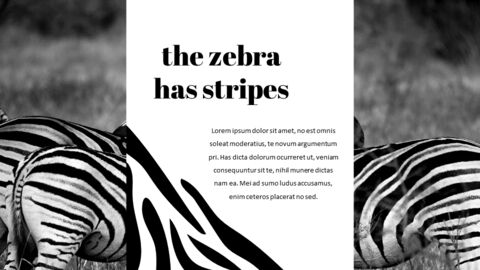zebra Startup PPT Templates_03
