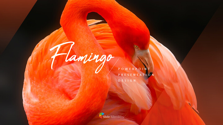 Flamingo Best PPT Templates_01