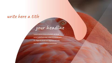 Flamingo Best PPT Templates_05
