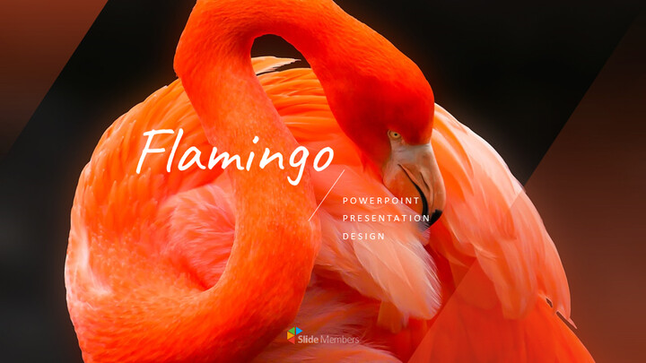 Flamingo Google Slides Presentation_01