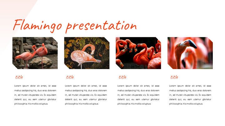 Flamingo Google Slides Presentation_02