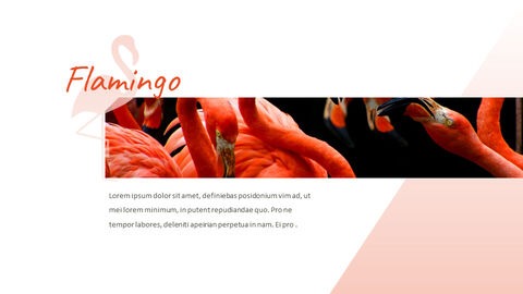 Flamingo Google Slides Presentation_03