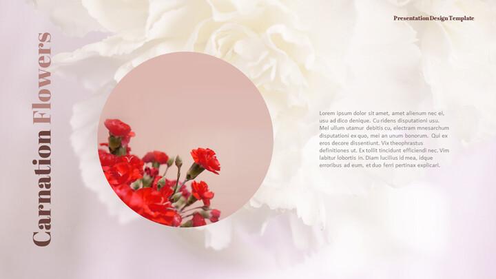 카네이션 꽃과 선물 피피티 템플릿 디자인_02