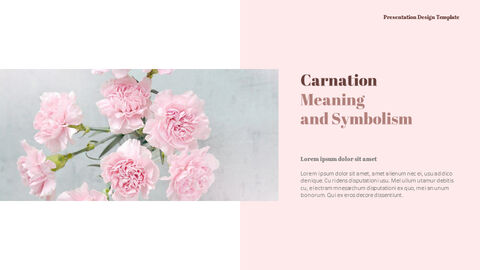 Carnation Flower and Gift PPT Templates Design_03