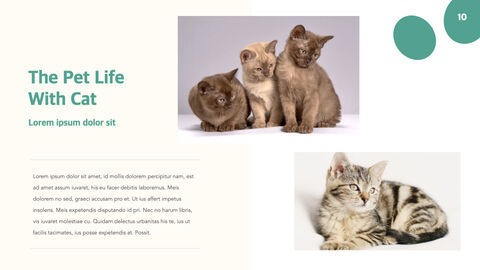 애완 동물 생활 PC용 키노트_10