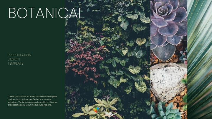 식물 Google 파워포인트 슬라이드_01