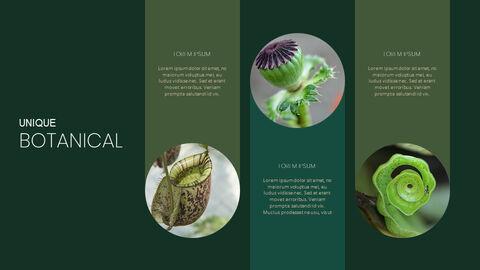 식물 Google 파워포인트 슬라이드_04