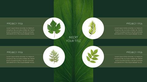 식물 Google 파워포인트 슬라이드_05