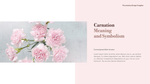 카네이션 꽃과 선물 키노트 템플릿_03