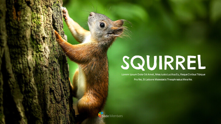 Squirrel Easy Slides Design_01