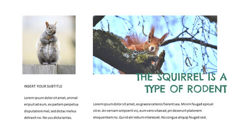 Squirrel Easy Slides Design_03