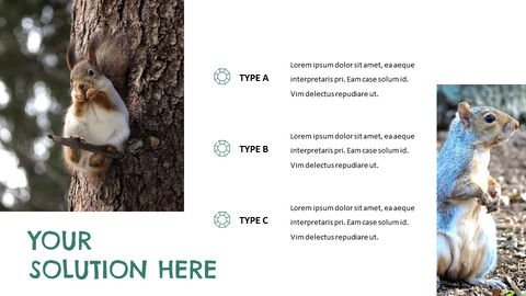 Squirrel Easy Slides Design_05