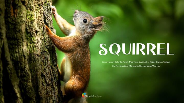 Squirrel PowerPoint Format_01