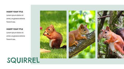 Squirrel PowerPoint Format_02