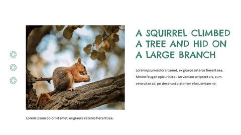 Squirrel PowerPoint Format_03