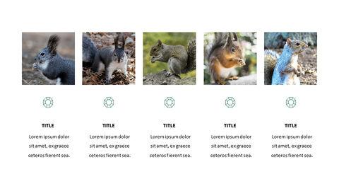 Squirrel PowerPoint Format_04