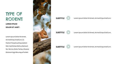 Squirrel PowerPoint Format_05