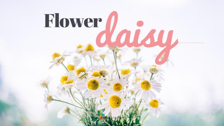 Daisy PPT Business_01