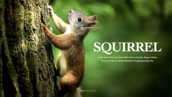 Squirrel iMac Keynote_01