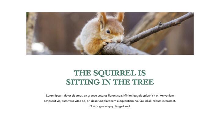 Squirrel iMac Keynote_02