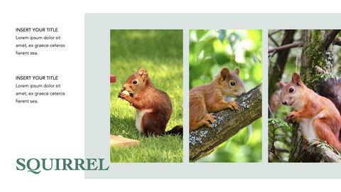 Squirrel iMac Keynote_03