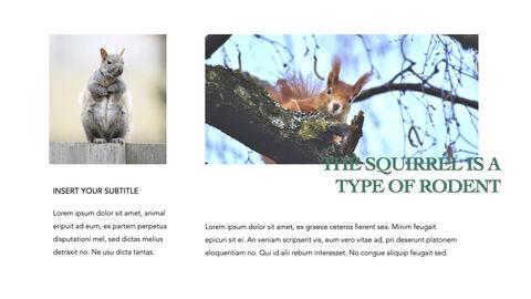 Squirrel iMac Keynote_07