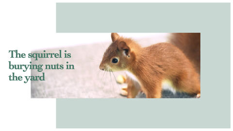 Squirrel iMac Keynote_08